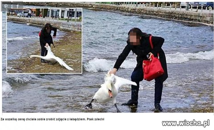 Wydarła łabędzia z wody żeby zrobić zdjęcie...