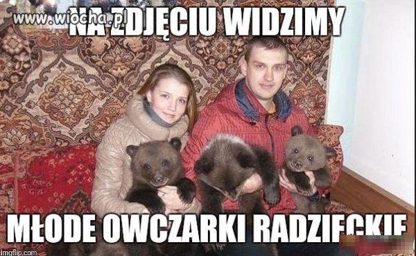 Rosyjskie owczarki