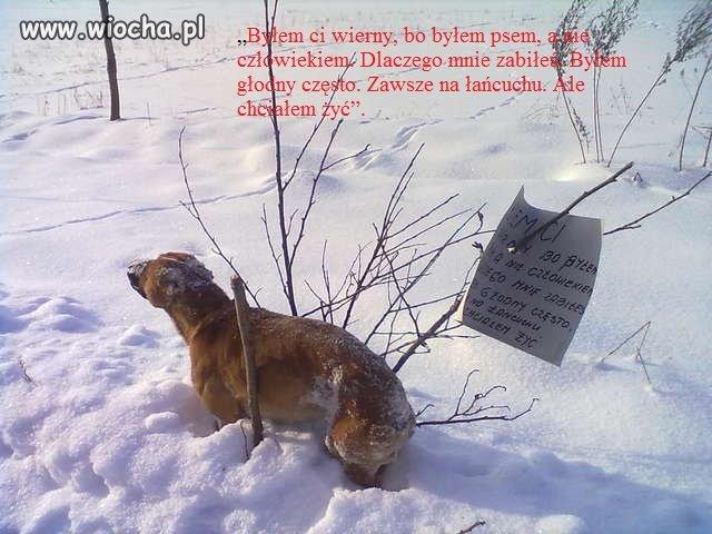 Tego psa znaleziono koło Węgielsztyna,