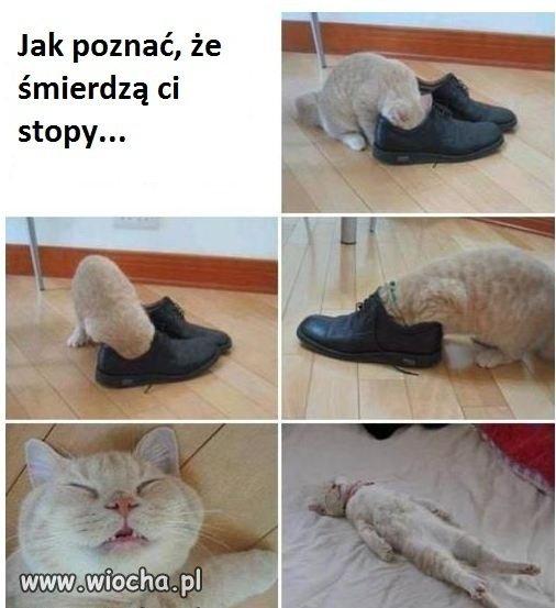 Kot prawdę ci powie...