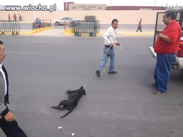 Męczenie zwierząt