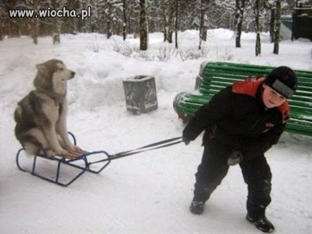 Nosił wilk razy kilka, ponieśli i wilka