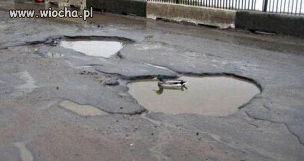 Polskie drogi oaz� dla zwierz�t