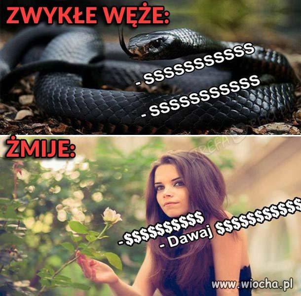 Dwa gatunki