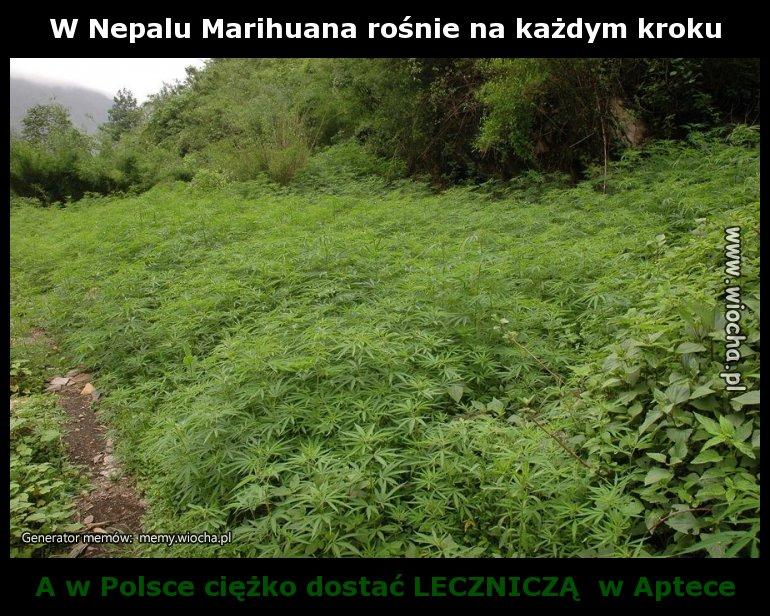 W Nepalu Marihuana rośnie na każdym kroku