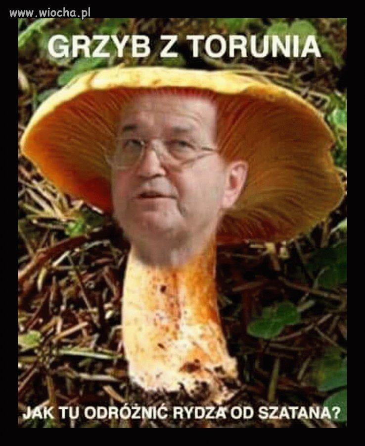Toruński grzyb