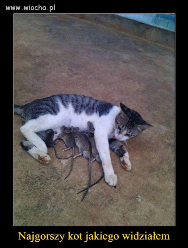 Najgorszy kot