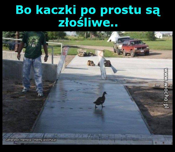 Bo kaczki po prostu są złośliwe