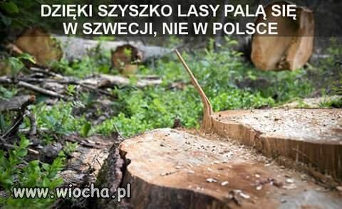 Lasów coraz mniej.