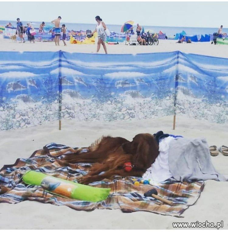 Pies Janusza na wakacjach