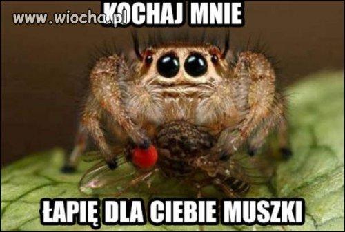 Kochaj pajaki