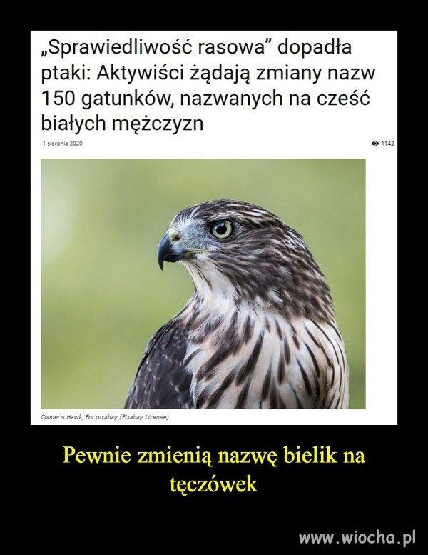 Rasistowskie ptaki ?