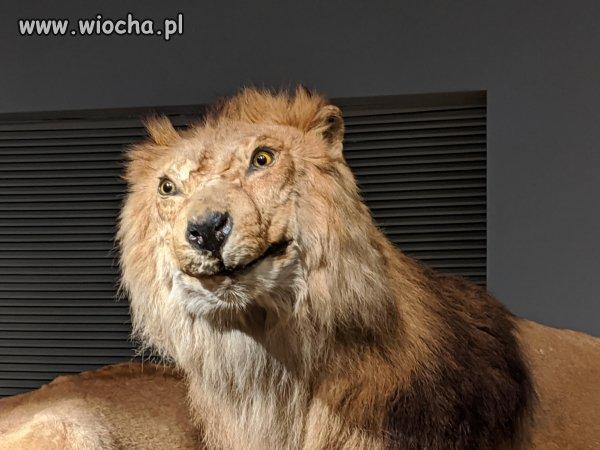 Polska lwem Europy