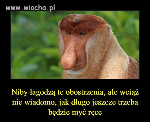 Januszowe Heheszki