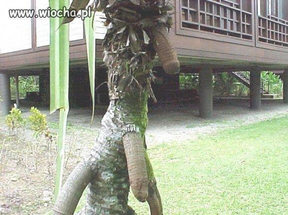 A jednak rosną na drzewach!!!