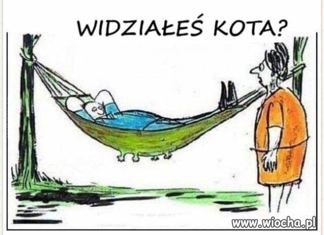 Najmodniejsze zwierze w Polsce