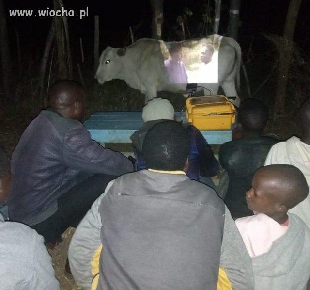 A ekran zrobimy z krowy