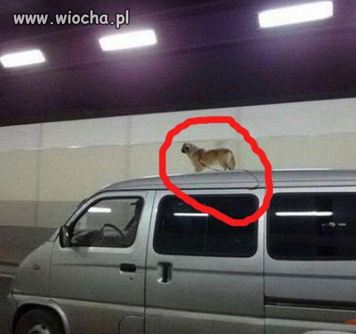 Wsiadł do auta i zapomniał o psie