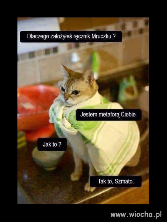 Kocia...