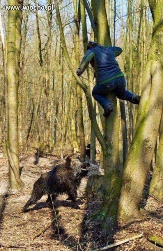Kto spotyka w lesie dzika