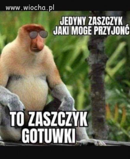 Zaszczyk