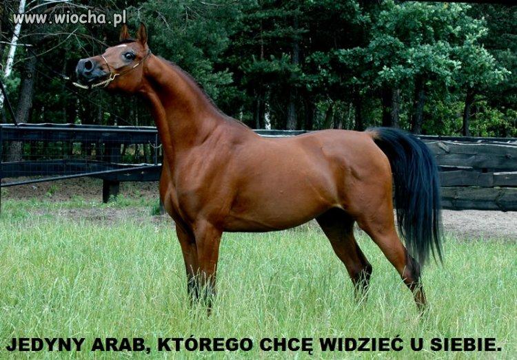 Jedyny arab