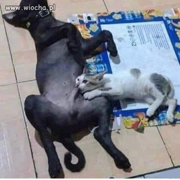 Suck it, kitty...