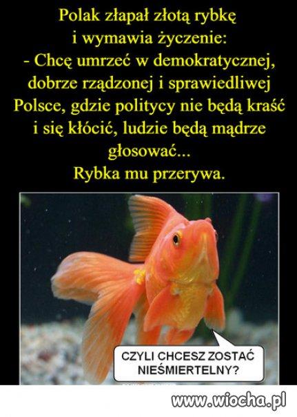 Zlota rybka o Polsce...