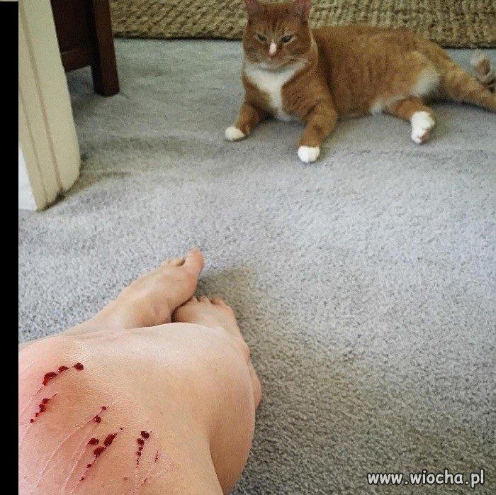 Ogromny Oddam kota w dobre ręce - wiocha.pl absurd 1346028 MM28