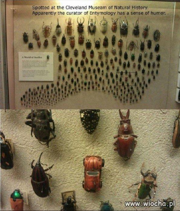 Muzeum Żuków