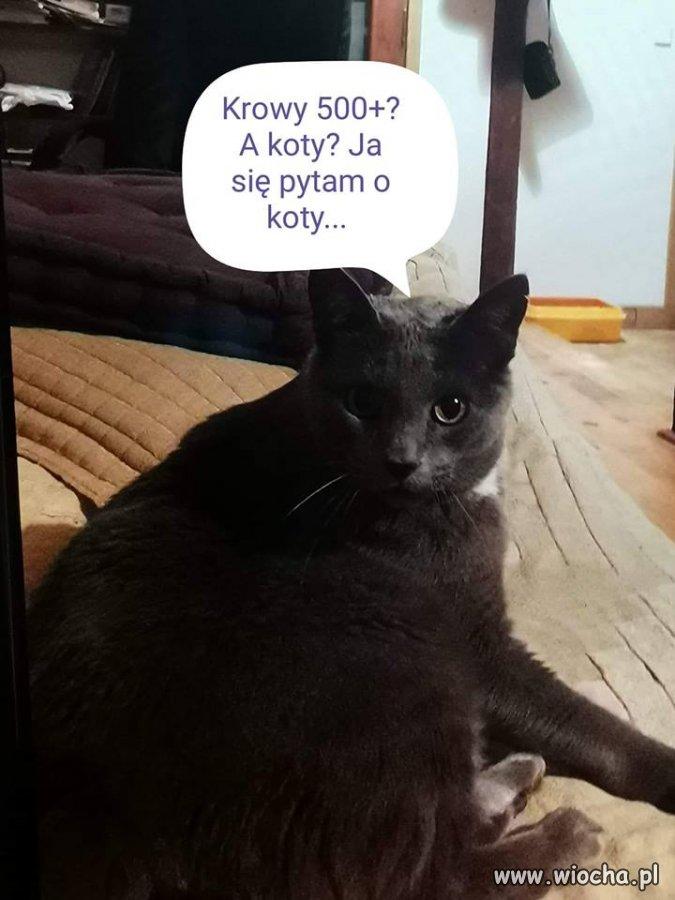 Na Koty i Psy