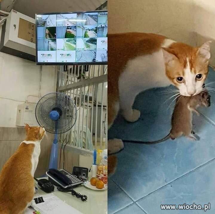 Potęga monitoringu