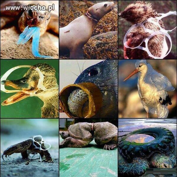 Cywilizacja vs natura