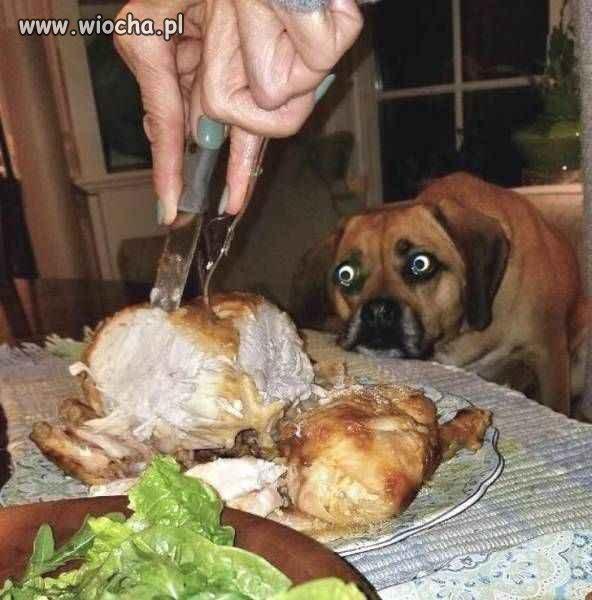 Dlaczego pies jest smutny?
