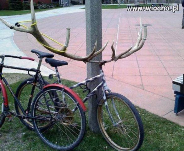 Rower rogacza.