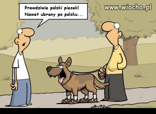 Prawdziwie polski piesek