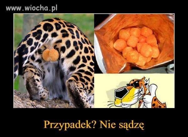 CZiperki