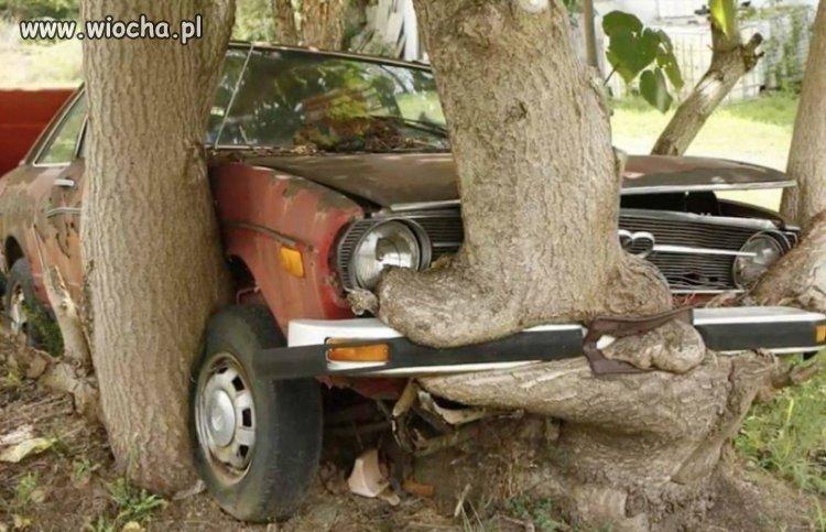 Sprzedam Audi z wykończeniem drewnianym.