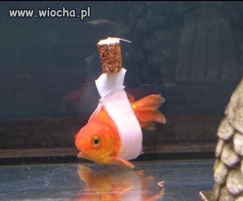 Ryba na ...
