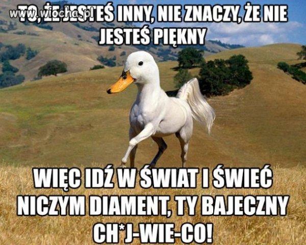 Nowa rasa konia polskiego