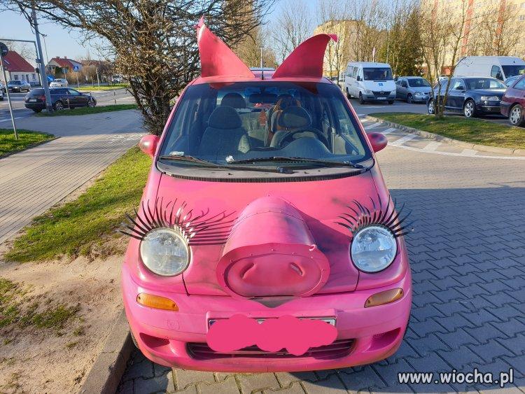 Najlepsza świnia w mieście