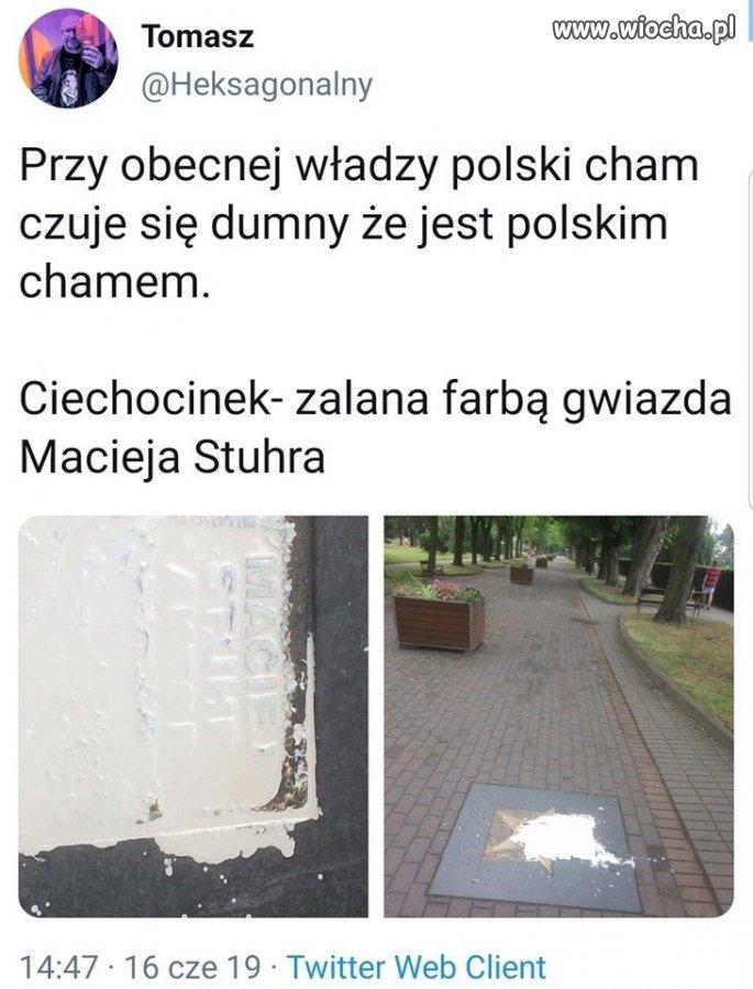 Polski cham