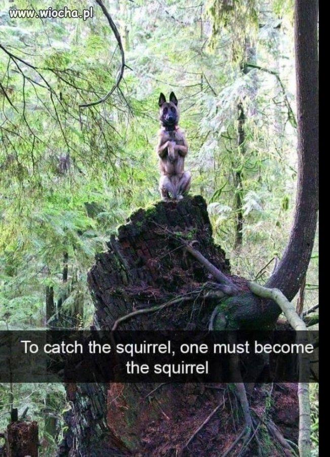 Żeby złapać wiewiórkę musisz myśleć jak wiewiórka