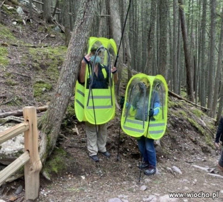 Typowy spacer w lesie