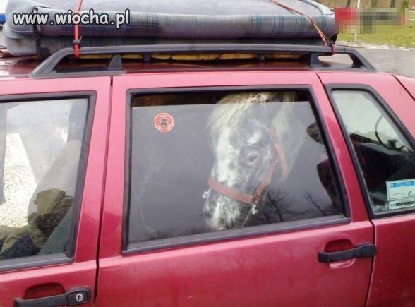 Koń spakowany?